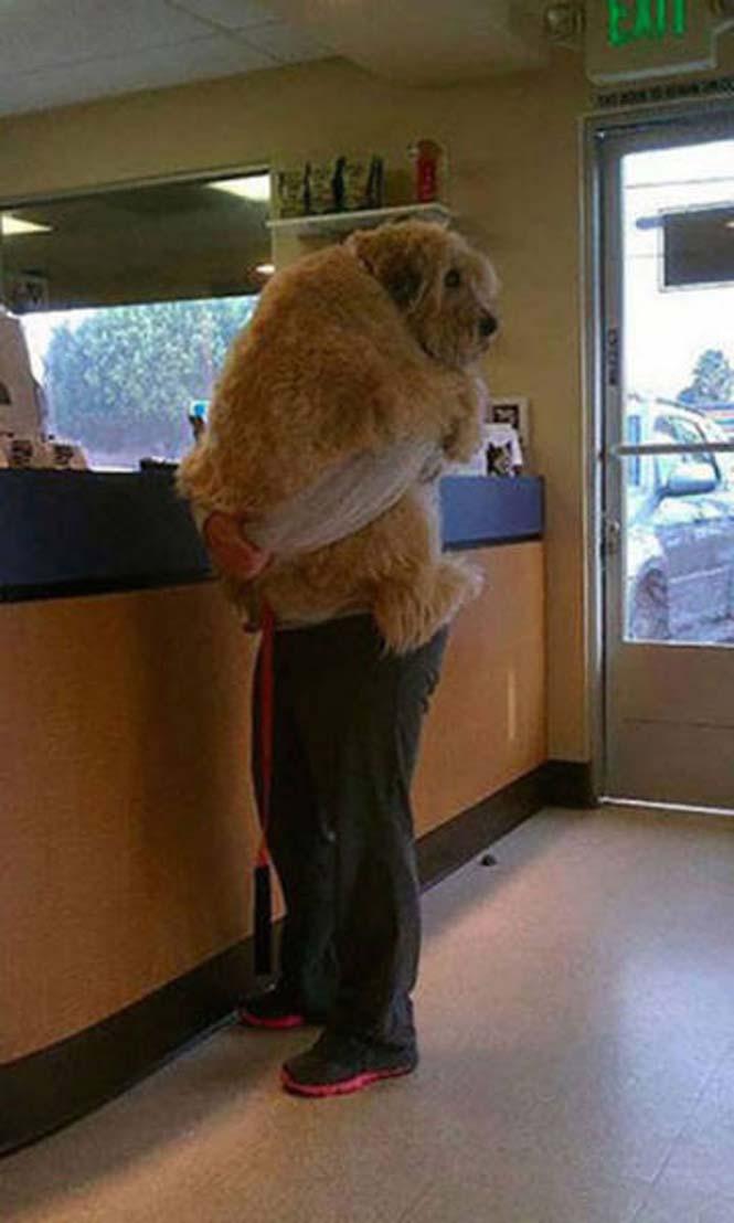 Κατοικίδια που δεν ενθουσιάζονται με την επίσκεψη στον κτηνίατρο (14)
