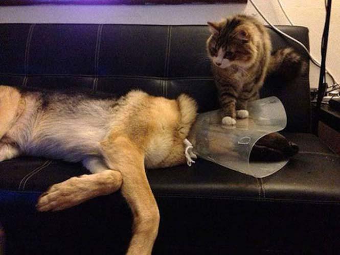 Κατοικίδια που δεν ενθουσιάζονται με την επίσκεψη στον κτηνίατρο (17)