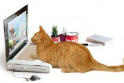 Ένα laptop ειδικά φτιαγμένο για γάτες (1)
