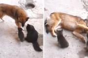 Μαμά γάτα επισκέφθηκε με τα γατάκια της έναν παλιό φίλο