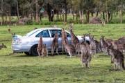 Μόνο στην Αυστραλία #13 (3)