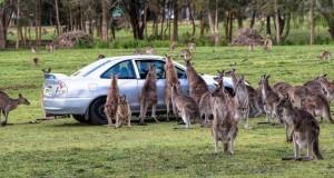 Μόνο στην Αυστραλία #13