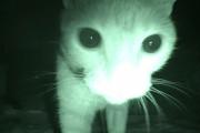 Η μυστική ζωή της γάτας σας στις 3 το πρωί