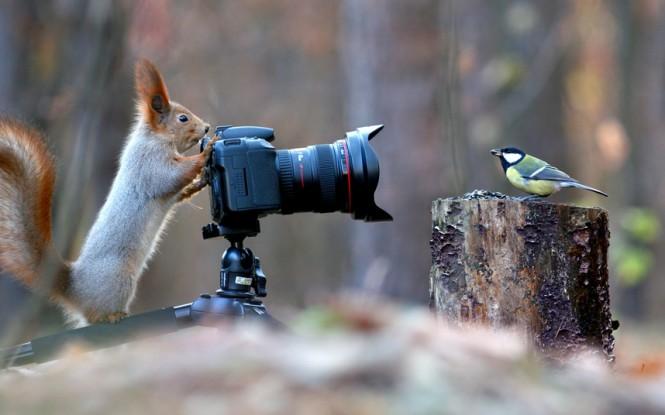 Κοίτα το πουλάκι! #2 | Φωτογραφία της ημέρας