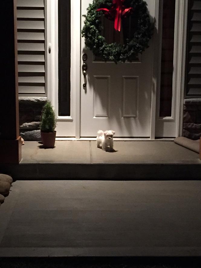 Οι γείτονες πήραν έναν καινούργιο σκύλο - φύλακα | Φωτογραφία της ημέρας