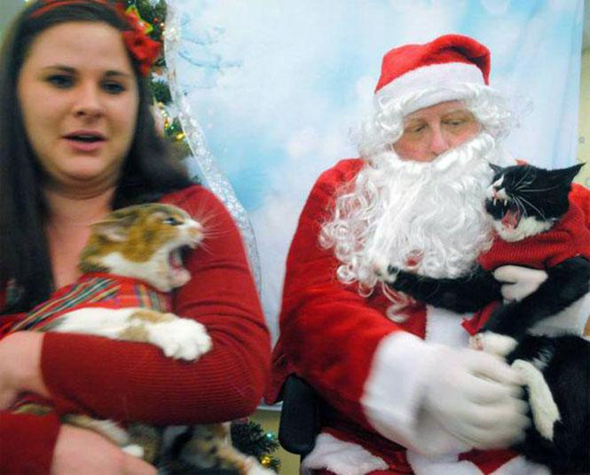 Μια γυναίκα πήγε τις γάτες της να φωτογραφηθούν με τον Άγιο Βασίλη... | Φωτογραφία της ημέρας