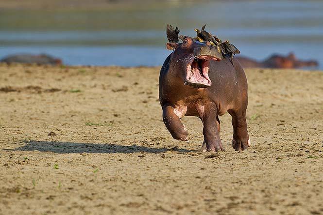 Οι 13 πιο αστείες φωτογραφίες άγριας φύσης του 2015 (7)