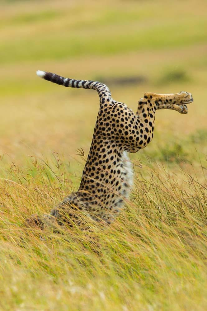 Οι 13 πιο αστείες φωτογραφίες άγριας φύσης του 2015 (12)