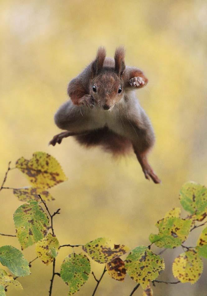Οι 13 πιο αστείες φωτογραφίες άγριας φύσης του 2015 (13)
