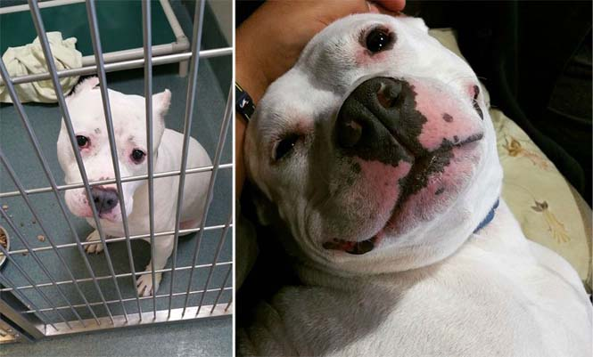 Σκύλοι πριν και μετά την υιοθεσία (1)