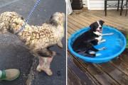 Σκύλοι πριν και μετά την υιοθεσία (2)
