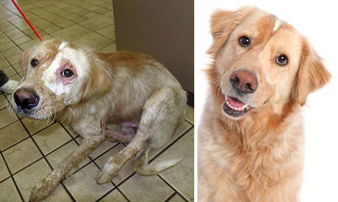 Σκύλοι πριν και μετά την υιοθεσία (3)