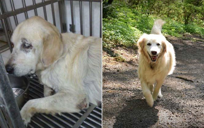 Σκύλοι πριν και μετά την υιοθεσία (5)