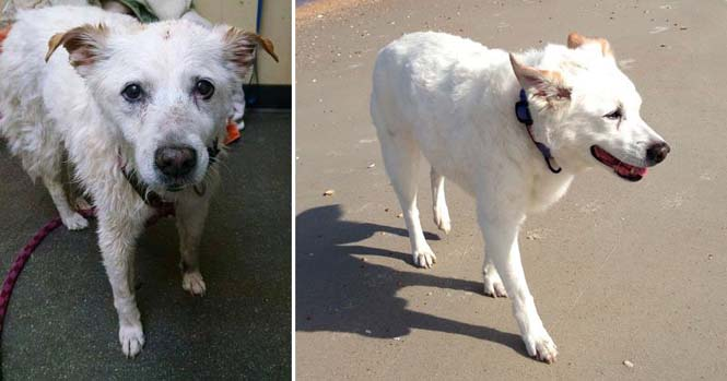 Σκύλοι πριν και μετά την υιοθεσία (6)