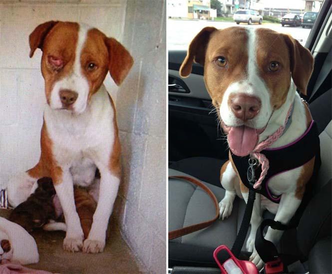 Σκύλοι πριν και μετά την υιοθεσία (9)