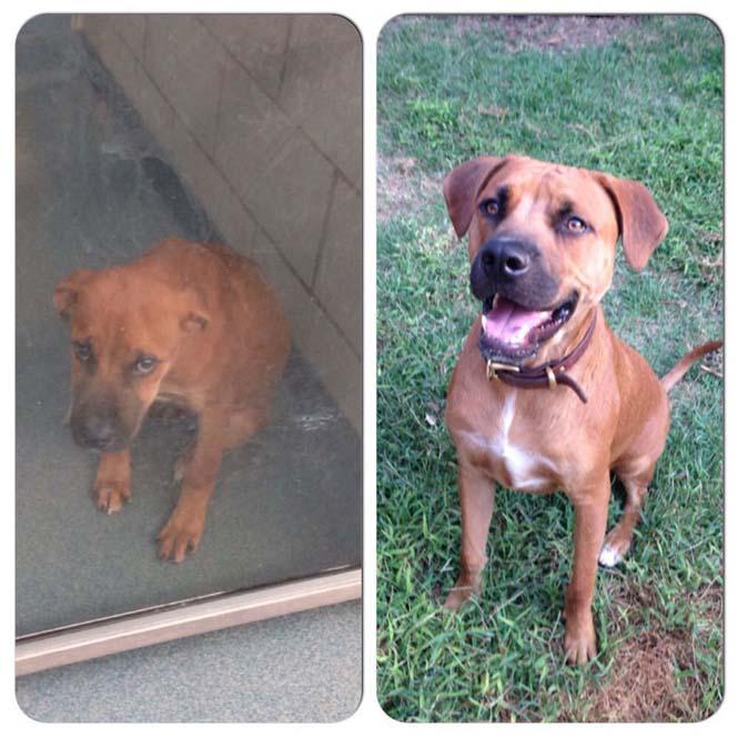 Σκύλοι πριν και μετά την υιοθεσία (12)