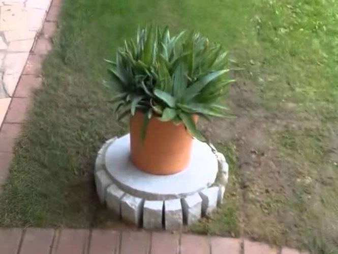 Τι κρύβεται κάτω από αυτή την γλάστρα στον κήπο