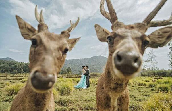 Αστείες φωτογραφίες γάμων #54 (1)