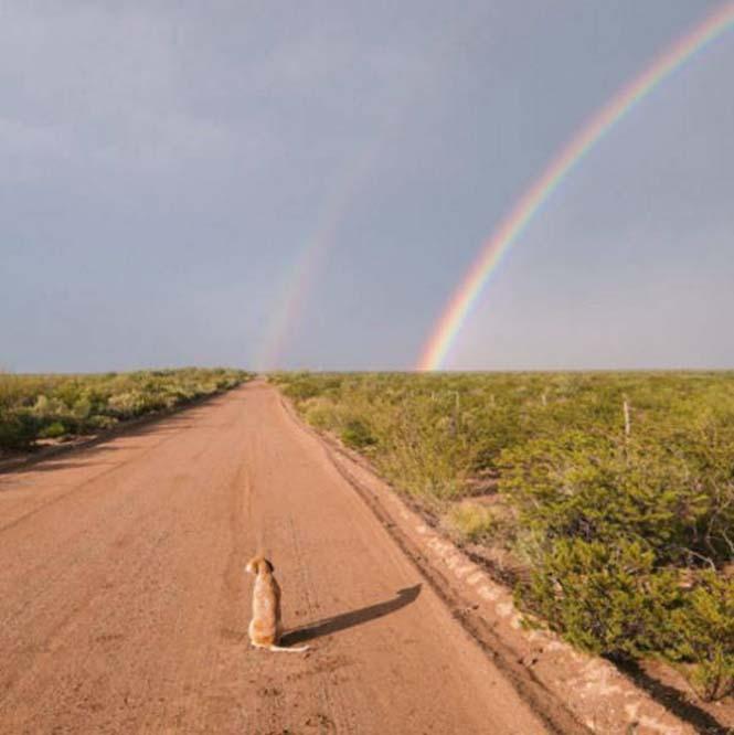 Αυτός ο σκύλος ζει το όνειρο κάθε ταξιδιώτη (1)