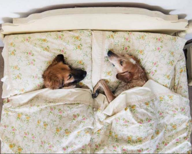 Αυτός ο σκύλος ζει το όνειρο κάθε ταξιδιώτη (2)