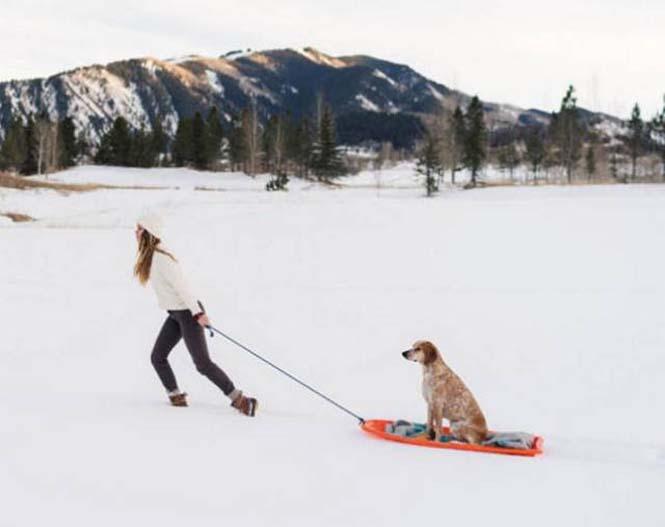 Αυτός ο σκύλος ζει το όνειρο κάθε ταξιδιώτη (7)