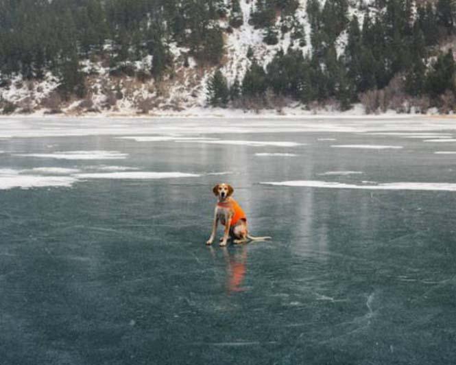 Αυτός ο σκύλος ζει το όνειρο κάθε ταξιδιώτη (8)