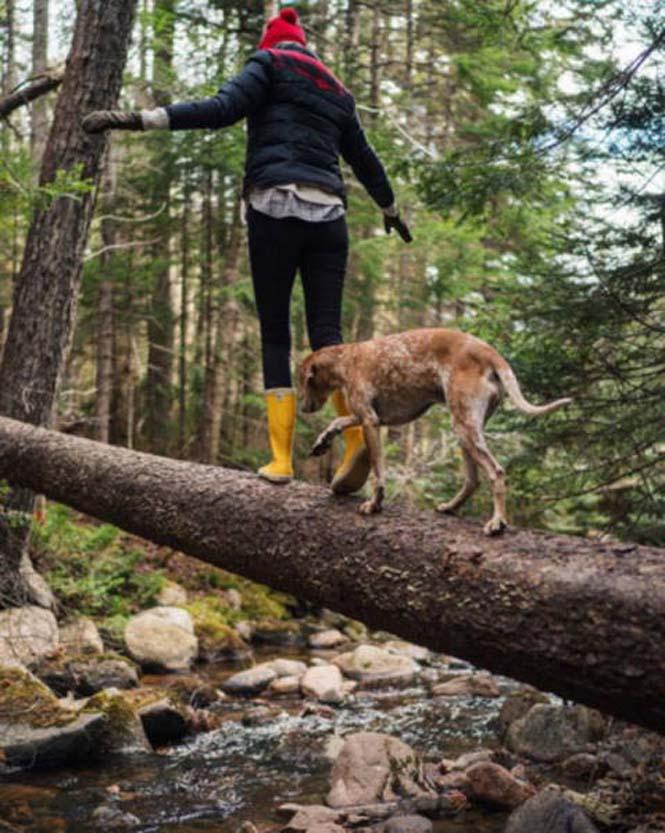 Αυτός ο σκύλος ζει το όνειρο κάθε ταξιδιώτη (10)