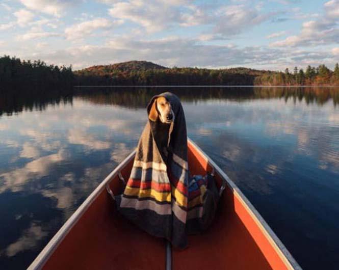 Αυτός ο σκύλος ζει το όνειρο κάθε ταξιδιώτη (12)