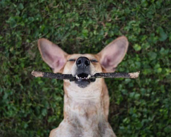 Αυτός ο σκύλος ζει το όνειρο κάθε ταξιδιώτη (15)