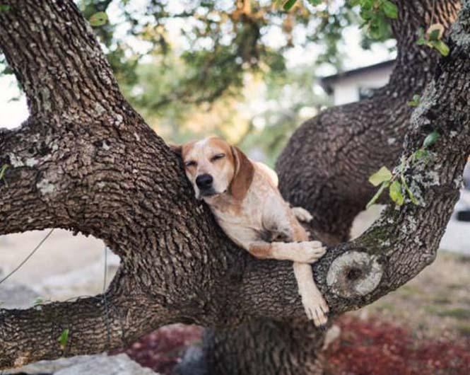 Αυτός ο σκύλος ζει το όνειρο κάθε ταξιδιώτη (16)
