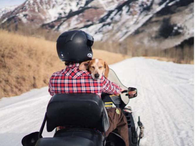 Αυτός ο σκύλος ζει το όνειρο κάθε ταξιδιώτη (19)