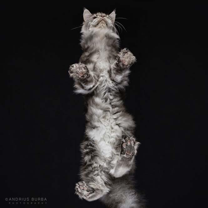 Φωτογραφίζοντας γάτες από κάτω (1)