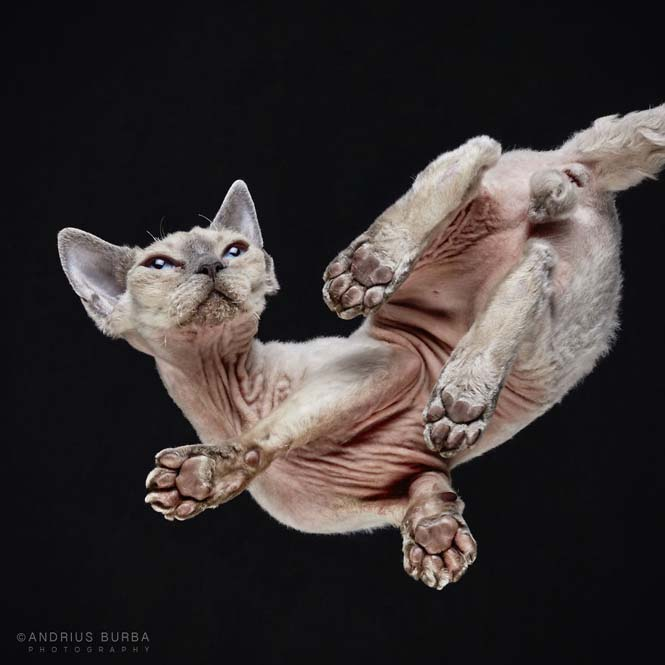 Φωτογραφίζοντας γάτες από κάτω (2)
