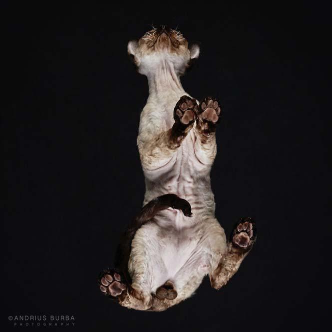 Φωτογραφίζοντας γάτες από κάτω (3)
