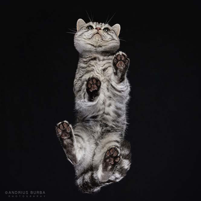 Φωτογραφίζοντας γάτες από κάτω (5)