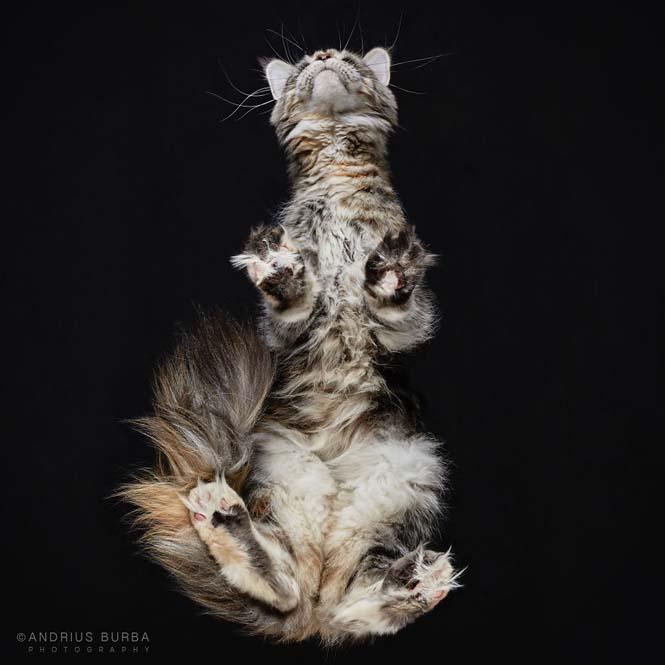 Φωτογραφίζοντας γάτες από κάτω (6)
