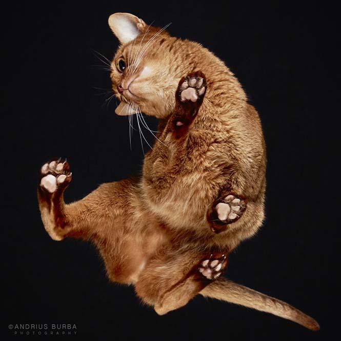 Φωτογραφίζοντας γάτες από κάτω (9)