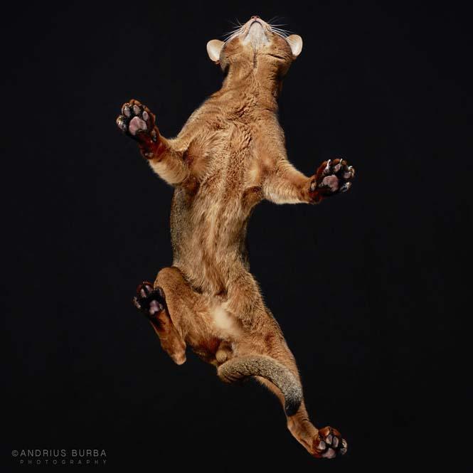 Φωτογραφίζοντας γάτες από κάτω (12)