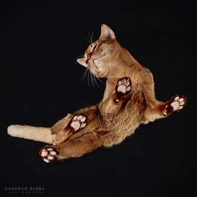 Φωτογραφίζοντας γάτες από κάτω (14)
