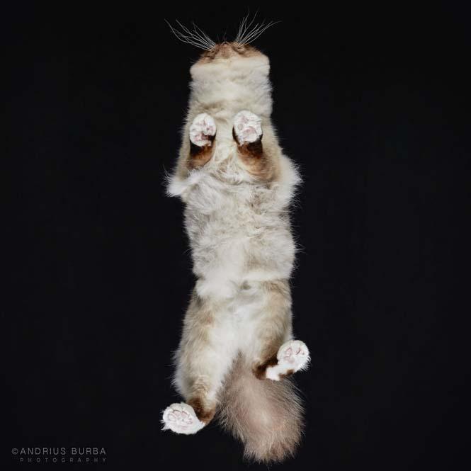 Φωτογραφίζοντας γάτες από κάτω (15)