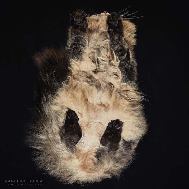 Φωτογραφίζοντας γάτες από κάτω (16)