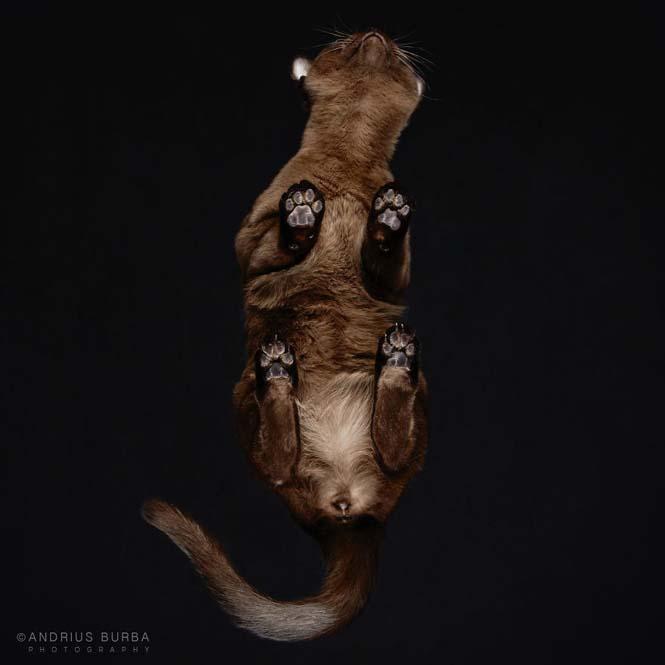 Φωτογραφίζοντας γάτες από κάτω (18)