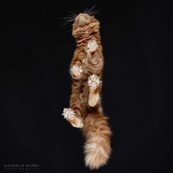 Φωτογραφίζοντας γάτες από κάτω (19)