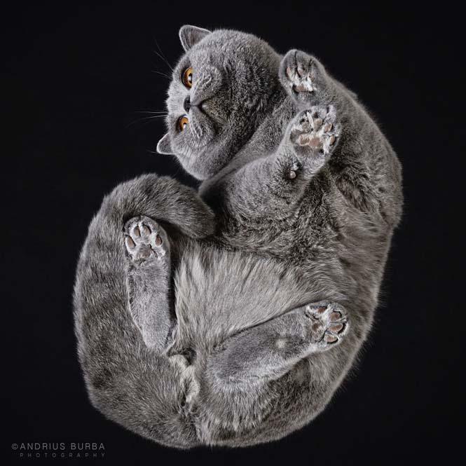 Φωτογραφίζοντας γάτες από κάτω (21)