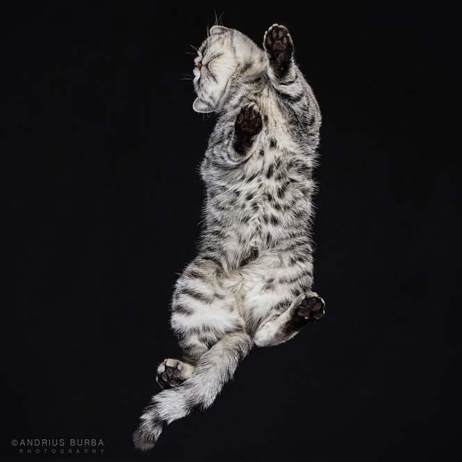Φωτογραφίζοντας γάτες από κάτω (24)