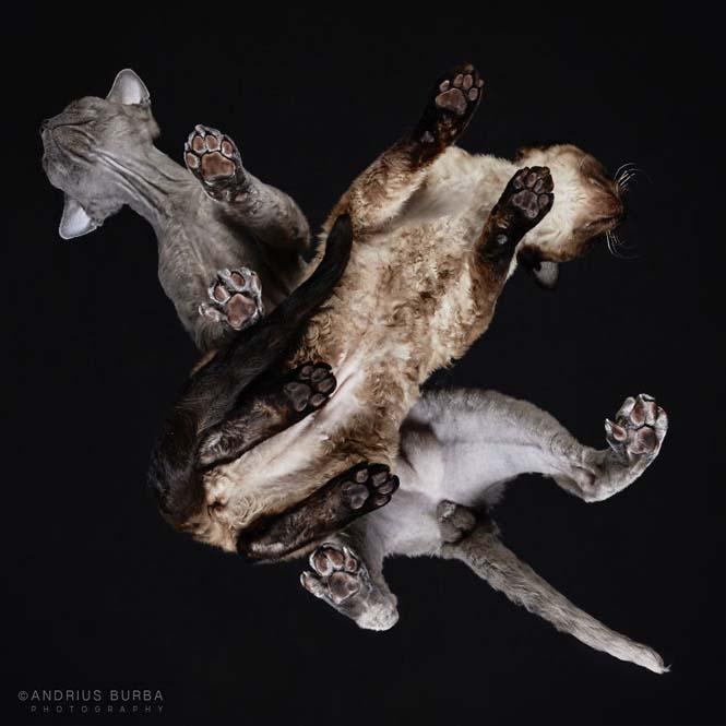 Φωτογραφίζοντας γάτες από κάτω (25)