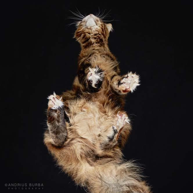 Φωτογραφίζοντας γάτες από κάτω (27)