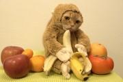 Γάτα γιορτάζει το Έτος του Πιθήκου με ξεκαρδιστικό τρόπο