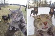 Γάτα βγάζει απίστευτες selfies (1)