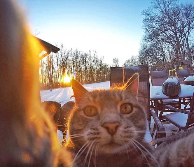 Γάτα βγάζει απίστευτες selfies (2)